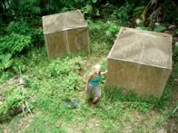 Enclosures used to manipulate the presence of walking sticks and snails in a Puerto rican rainforest.