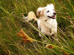 My dog, Cana, enjoy the prairie.
